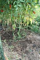 Plantapillar improved tomato cages