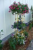 Trellis as a plant stand 2